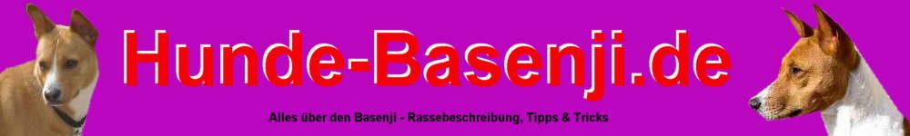 Basenji Hunde Informationen Rassebeschreibung Aussehen Charakter